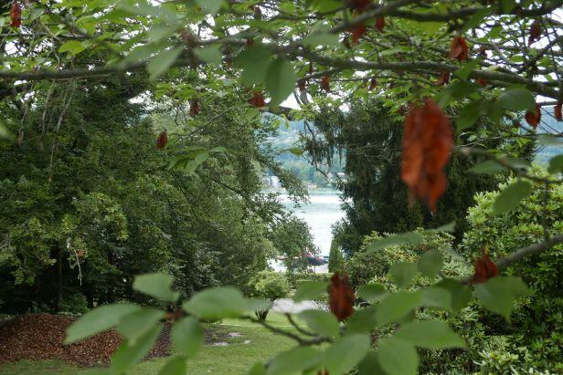 Wörthersee durch Blätterwald