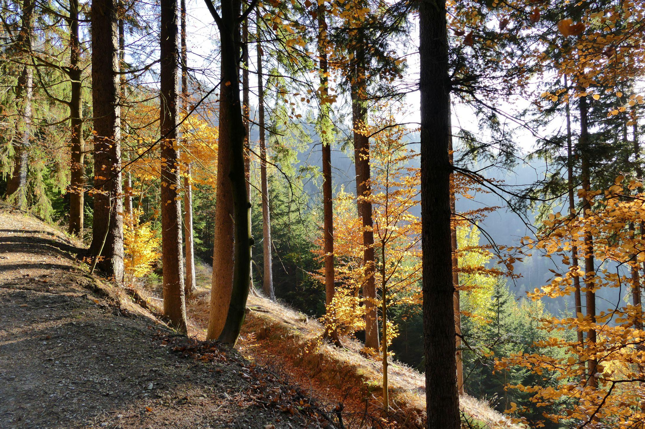 P1050364 Foto Herbstwald