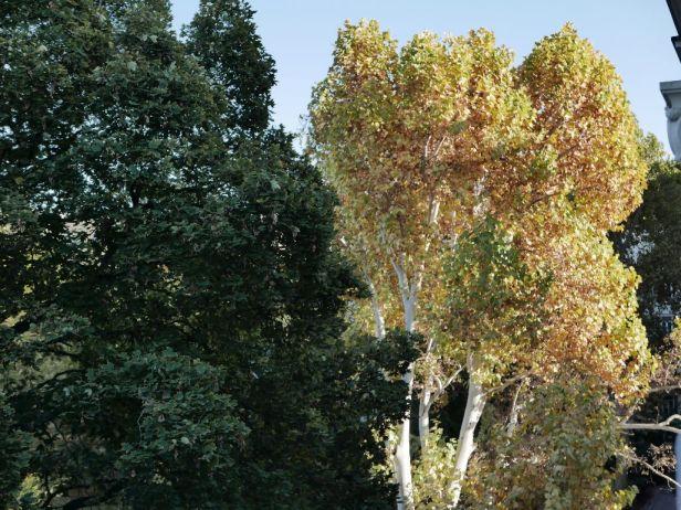Herbst Draschepark-4_P1190641