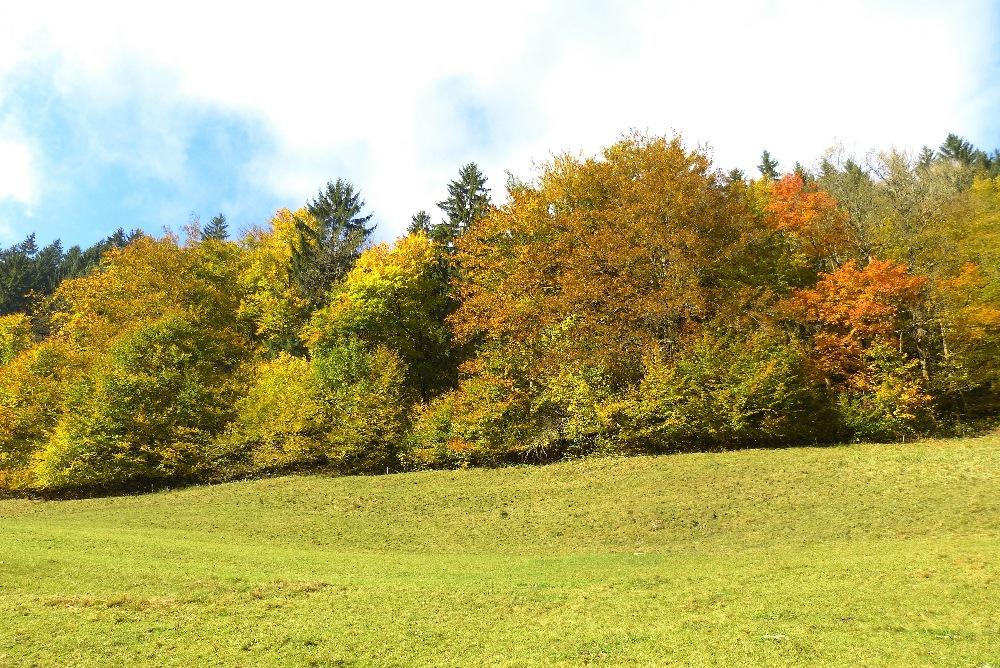 P1060610_ Foto Herbstwald